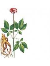Женьшень Индийский (Withania Somnifera)
